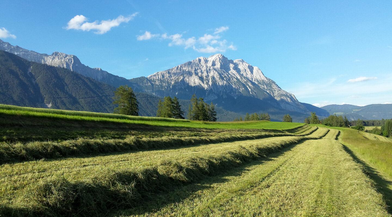 Heuernte in Obermieming